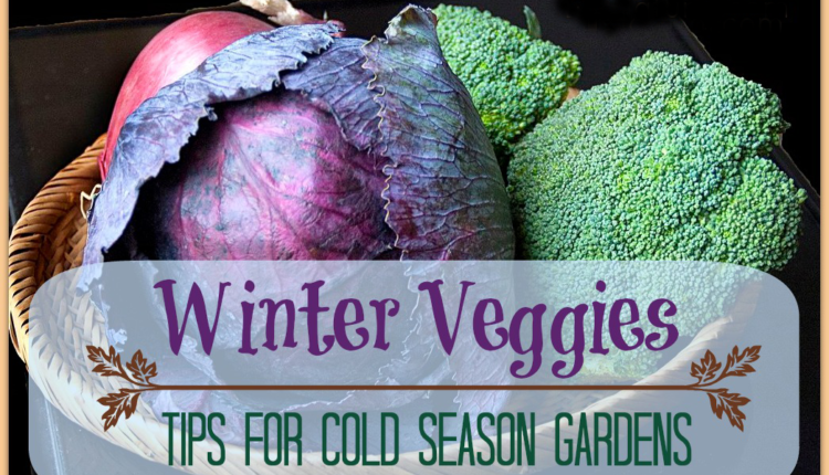 Some Great Winter Foods Tips for Your Daily Diet