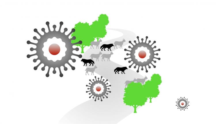 La pandémie et l'écologie  Exploring the effects on Nature of COVID-19
